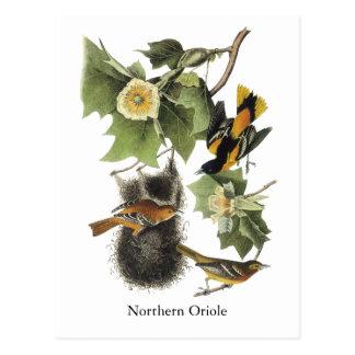 Oriole septentrional, Juan Audubon Postal