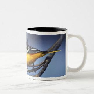 Oriole septentrional masculino, antes Baltimore Or Taza De Café