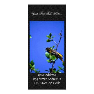 Oriole septentrional tarjetas publicitarias personalizadas