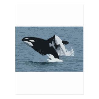 Orka Whale Postcard