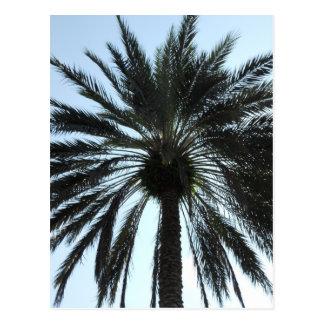 Orlando Palm Tree Postcard