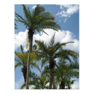 Orlando Palms Postcard