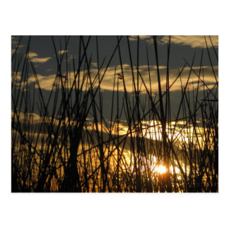 Orlando Sunset Postcard