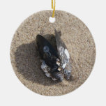 Ornament: Mussel on Sandy Ventura Beach