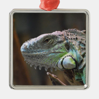 Ornament with head of colourful Iguana lizard