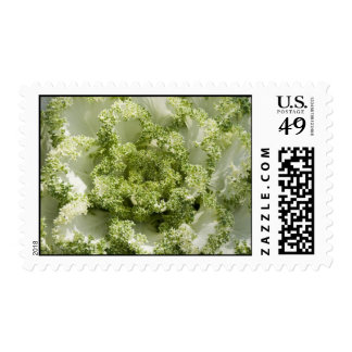 Ornamental Cabbage Stamps