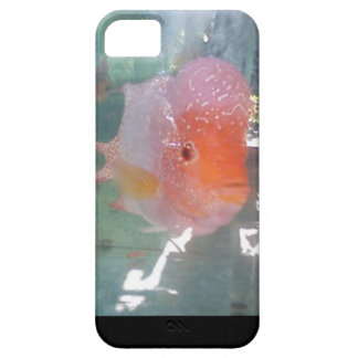 Ornamental Flower Horn Fish iPhone 5 Cases