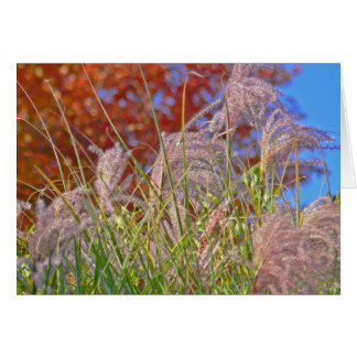 """ORNAMENTAL GRASS AND BLUE SKY"" (PHOTOG) STATIONERY NOTE CARD"
