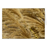 Ornamental Grasses in Fall Card