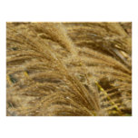 Ornamental Grasses in Fall Poster