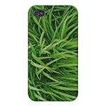 Ornamental grasses iPhone case iPhone 4/4S Cover