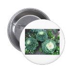 ornamental kale pinback button