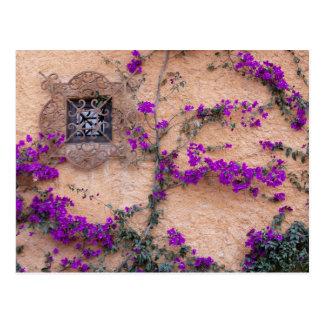 Ornamental window with bougainvillea postcards