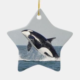 Ornamento 2 de la infracción de la orca adorno navideño de cerámica en forma de estrella
