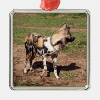 Ornamento africano del navidad del perro salvaje adorno navideño cuadrado de metal