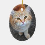 Ornamento anaranjado del gato adornos
