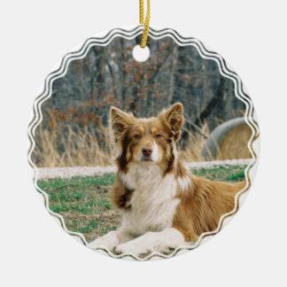 Ornamento australiano del perro de pastor adorno de navidad