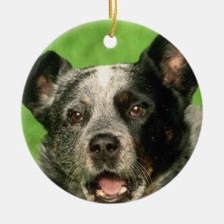 Ornamento australiano del perro del ganado adorno