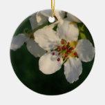 Ornamento blanco de la primavera del flor de la pe ornamentos para reyes magos