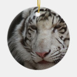 Ornamento blanco del tigre adorno de reyes