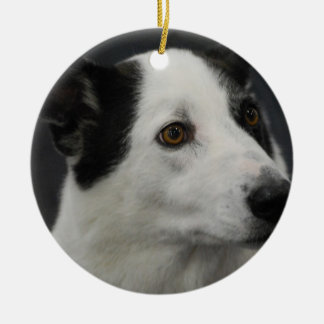 Ornamento blanco y negro del perro de Canaan Adorno Redondo De Cerámica