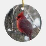 Ornamento cardinal del navidad de la fotografía (p ornamento de navidad