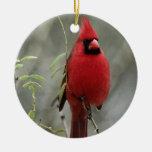 Ornamento cardinal magnífico de la foto ornamentos de reyes magos