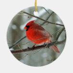 Ornamento cardinal rojo del invierno ornatos