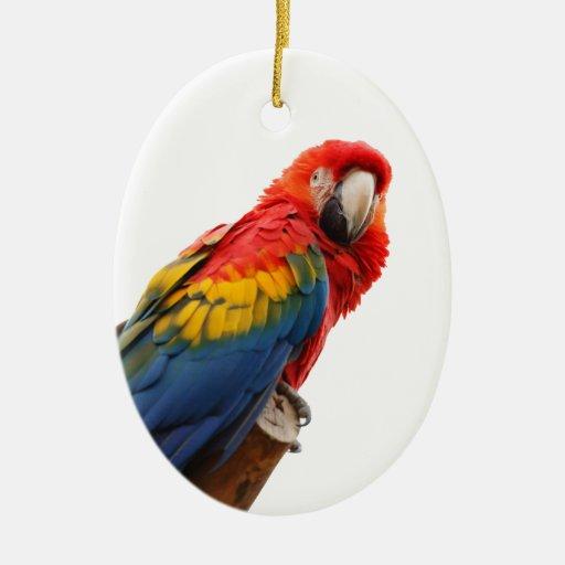 Ornamento colgante de la foto hermosa del pájaro ornato