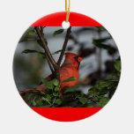 Ornamento con el cardenal ornatos