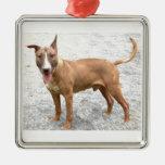 Ornamento de bull terrier del inglés adorno cuadrado plateado