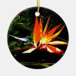 Ornamento de la ave del paraíso ornamento de navidad
