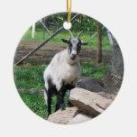 Ornamento de la cabra ornatos