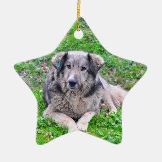 Ornamento de la estrella de perro ornamento de navidad