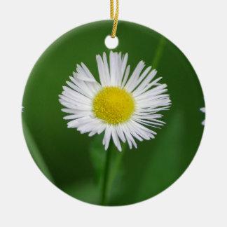 Ornamento de la flor de Fleabane de la margarita Adorno Redondo De Cerámica