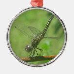Ornamento de la libélula ornamentos de reyes magos