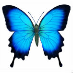 Ornamento de la mariposa de Papilio Ulises Adorno Fotoescultura