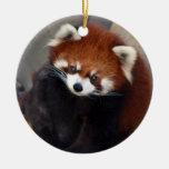 Ornamento de la panda roja ornato