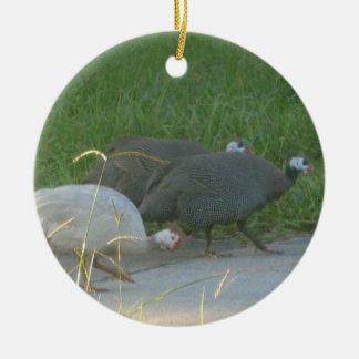 Ornamento de las aves de Guniea Ornato