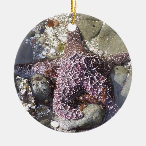 Ornamento de las estrellas de mar adorno navideño redondo de cerámica