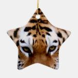 Ornamento de las marcas del tigre ornamente de reyes