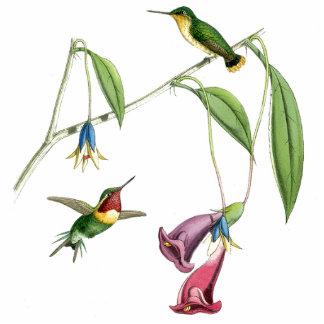 Ornamento de los colibríes de Goulds Esculturas Fotográficas