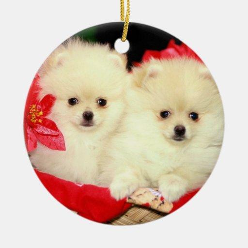 Ornamento de Pomeranians del navidad Ornamentos De Reyes Magos