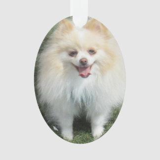 Ornamento del acrílico de Pomeranian
