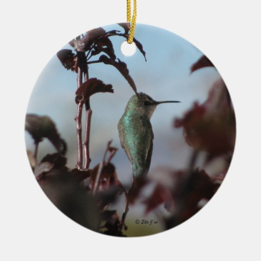 Ornamento del colibrí adorno redondo de cerámica