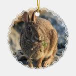 Ornamento del conejo ornamente de reyes