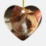 Ornamento del corazón de la foto del gato del mac ornamentos de reyes