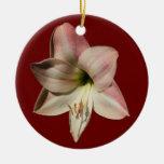 Ornamento del ~ del Amaryllis Ornaments Para Arbol De Navidad