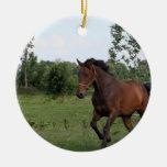 Ornamento del diseño del caballo de bahía ornato
