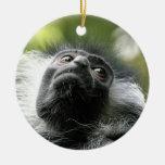 Ornamento del mono de Colobus de Rwanda Ornamentos Para Reyes Magos